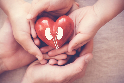 Three sets of hands holding a red heart with kidneys inside